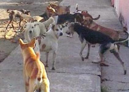 cantidad de perros callejeros:
